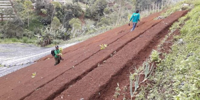 Alih fungsi lahan dikuasai oleh PTPN VIII yang berada di blok Gunung Karamat dfan Blok Catang Angkong. Foto spr